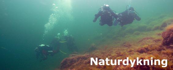 naturdykning_banner